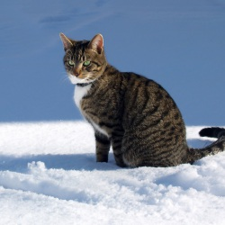 Miniminou à la neige